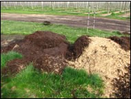 Adding Compost to Improve Organic Matter